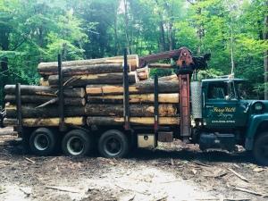 Logging in Western Massachusetts